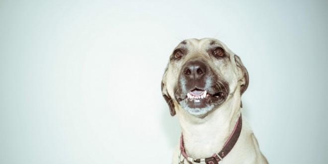 Gør hunden glad med et hundehalsbånd