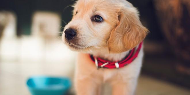 Find hundemad og hundeudstyr til det gode hundeliv hos Barksnbones.dk